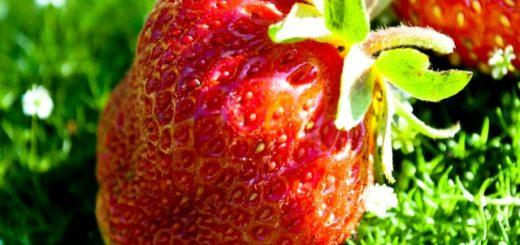 секреты выращивания клубники