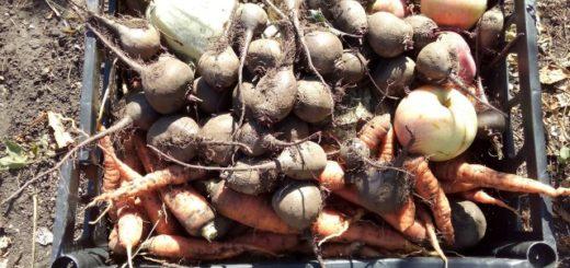хранение овощей зимой