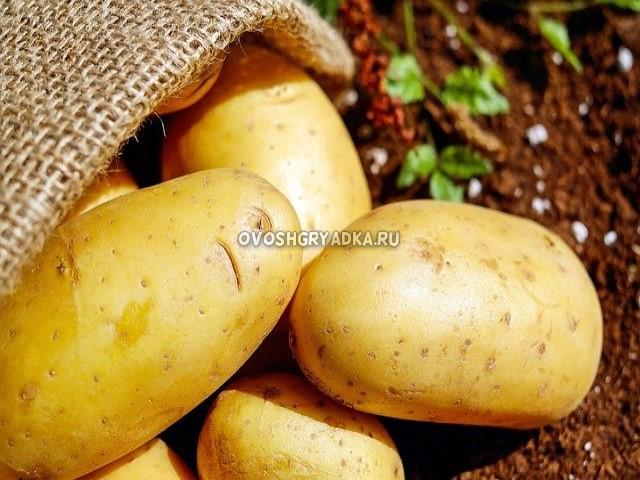 как копать картошку