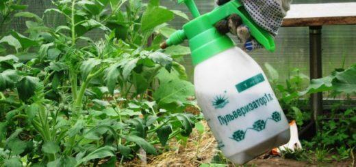 Подкормка по листьям растений из пульверизатора
