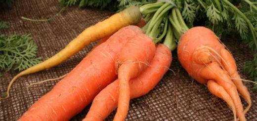 корявая и рогатая морковка